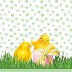 chicken in the spring