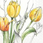 colourful tulips yellow